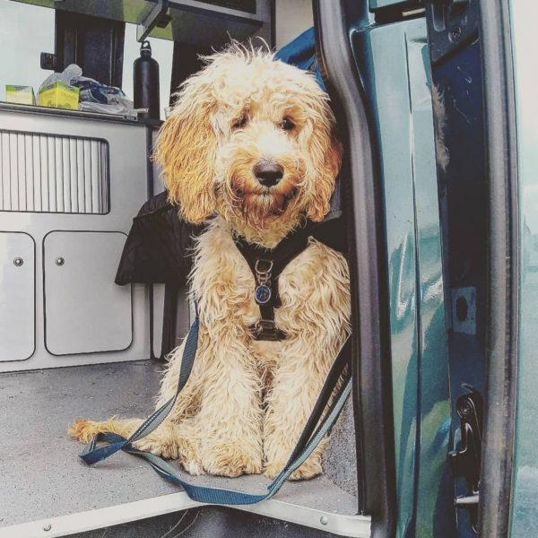 dog friendly campervan hire